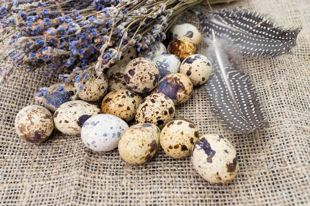 what do quail eggs look like