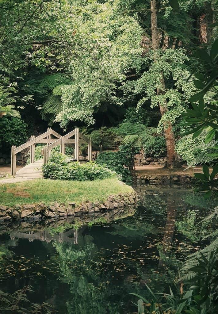 rainwater garden