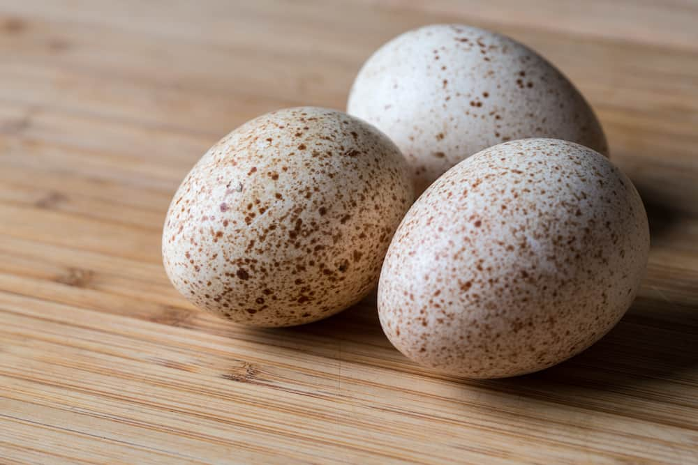 turkey eggs