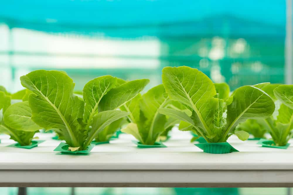 what are the 6 types of hydroponics